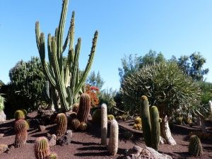 Monthly Thoughts Fuerteventura002