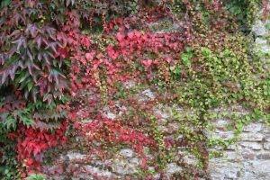 bunt gefärbte Herbstblätter