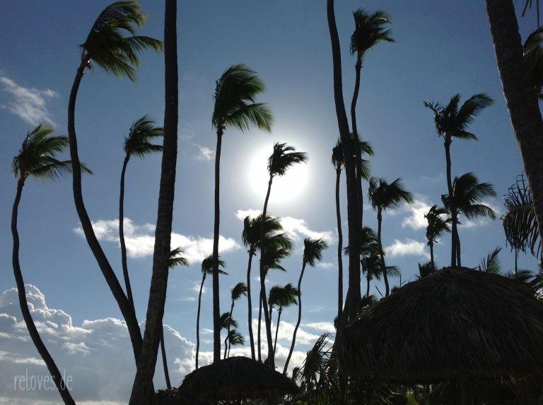 Palmen in der Domenikanischen Republik
