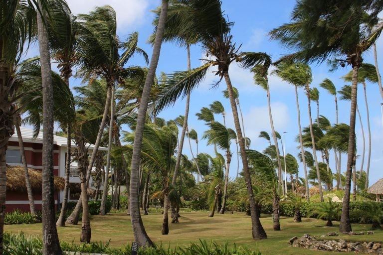 Palmen in der Hotelanlage